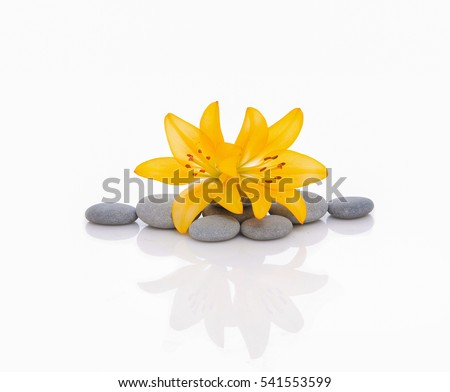 Lily flower and pebble. Isolated on white background