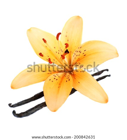 Lily flower and vanilla sticks isolated on white - stock photo