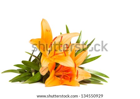 lily flower isolated on a white background - stock photo