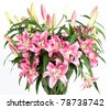 Lily flowers bouquet - stock photo