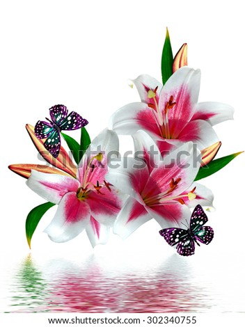lily flowers isolated on white background