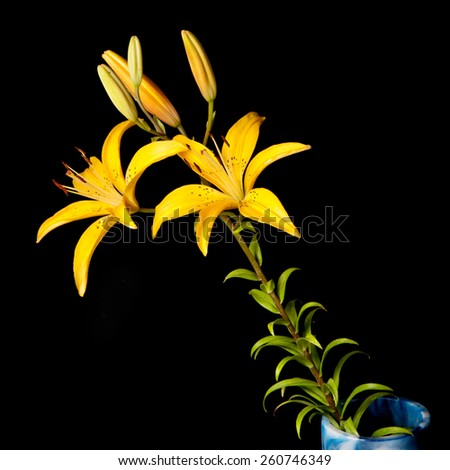 lily isolated on black - stock photo