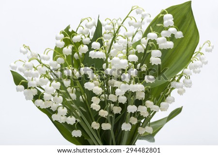 Lily of the Valley (Convallaria Majalis) isolated on white - stock photo