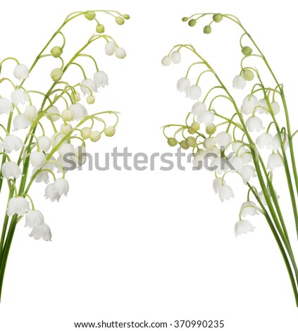 lily-of-the-valley flowers isolated on white background - stock photo