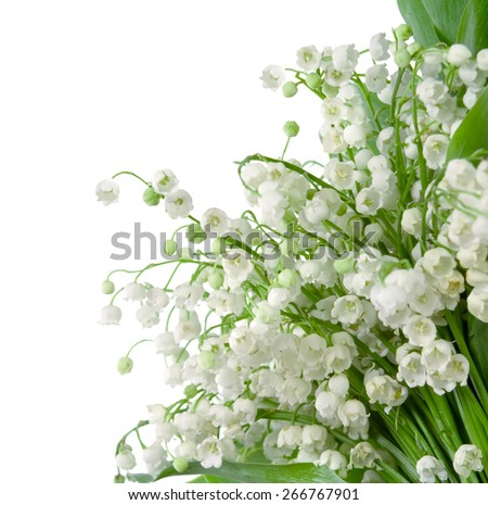 Lily of the valley isolated on white background - stock photo