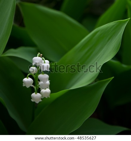 Lily of the valley on spring glade - stock photo