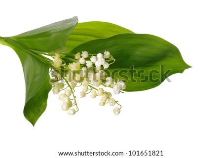 Lily of the valley over white . Bouquet, bunch of flowers. - stock photo