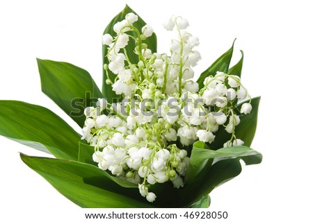 lily-of-the-valley with isolated background - stock photo