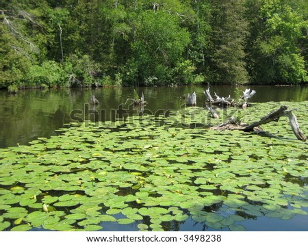 Lily pads and tree trunks in river