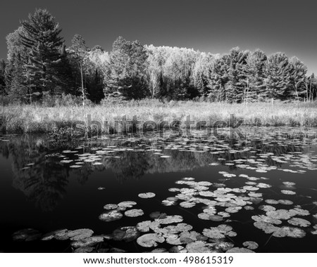 Lily pads form natural abstract patterns on the surface of a secluded pond in the north woods of Wisconsin