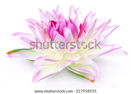 Lily pink isolated on white - stock photo