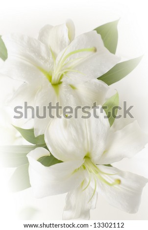 lily pistil abstract - stock photo
