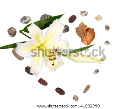 lily with stone as a heart - stock photo