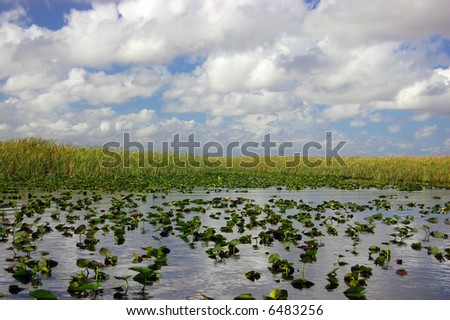 Lilypads in the Everglades - stock photo