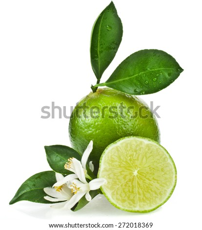 Lime citrus fruit flowering close up isolated on white background - stock photo