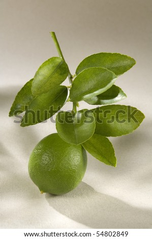 Lime in its Branch