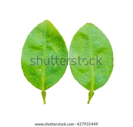 lime leaves on wood background  isolated on white background, Fresh limes leaf on wooden background isolated on white background