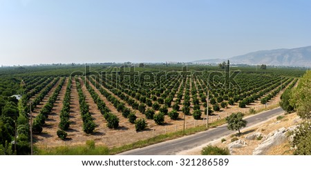 lime plantation in Kemer. Turkey