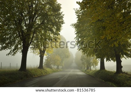 Lime tree avenue in Pivola, Slovenia - stock photo