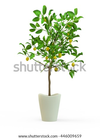 Lime tree plant in a flower pot isolated on white background. 3D Rendering, Illustration. - stock photo