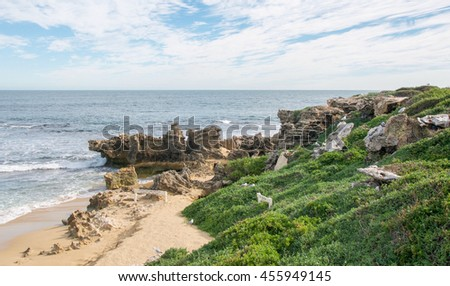 Limestone outcropping and remote Indian Ocean beach at Penguin Island in Rockingham, Western Australia/Limestone Outcrop/Penguin Island, Rockingham, Western Australia - stock photo