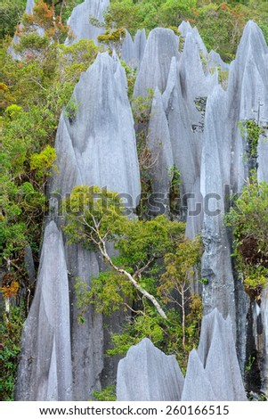 Limestone pinnacles at gunung mulu national park - stock photo