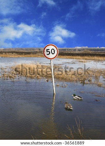 Limit of speed for wild ducks on a flooded road - stock photo