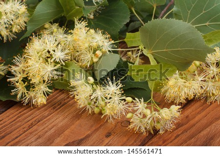 Linden yellow flowers on a brown wooden table - stock photo