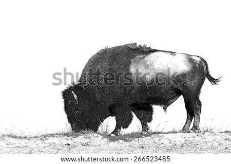 Line art/pen and ink illustration style image of American Bison (Buffalo) skylined on a ridge against a blue sky with clouds