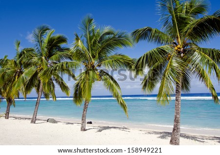 Line of coconut palm trees at Titikaveka beach in Rarotonga Cook Islands during sunset. - stock photo