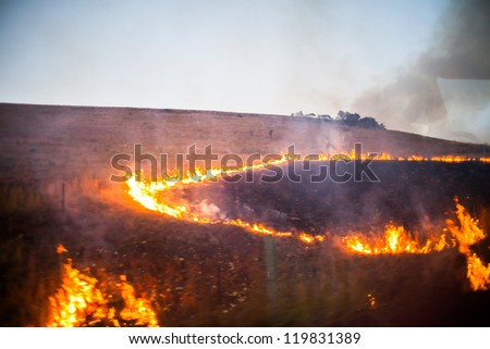Line of fire in brush from an African wildifre - stock photo