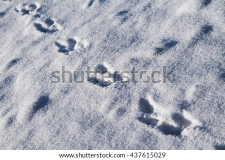 line of footprints of an animal in the snow