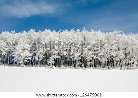 Line of frozen tree in a snowy landscape