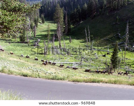 Line of Horse Riders - riders on a horse mountain trail in Yellowstone National Park. - stock photo