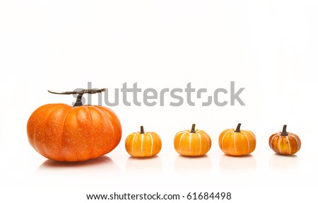 Line of pumpkins in a row on a white background - stock photo