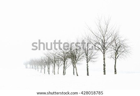Line of trees in winter snow