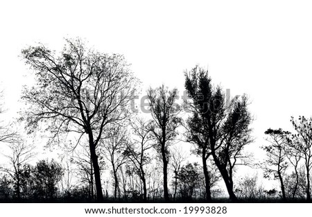 line of trees, silhouetted against a bright sky - stock photo