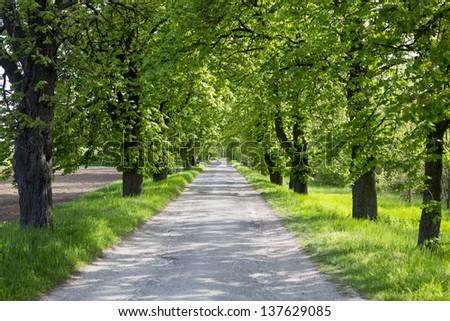 line of trees  still life - stock photo