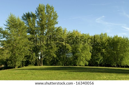 Linear trees and grass over the blue sky - stock photo