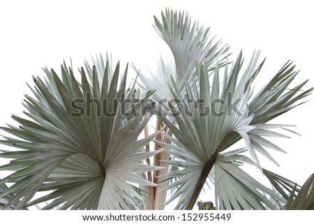 Lines and textures of gray Palm leaves  - stock photo