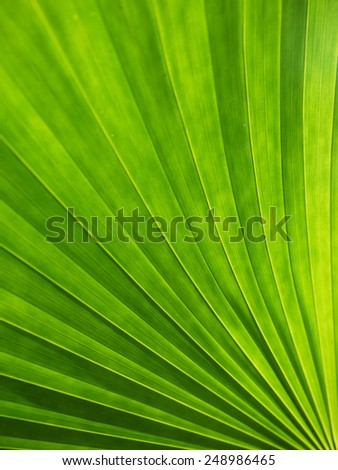 Lines and textures of Green Palm leaves, unfocused - stock photo