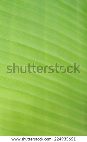 lines of leaf - stock photo