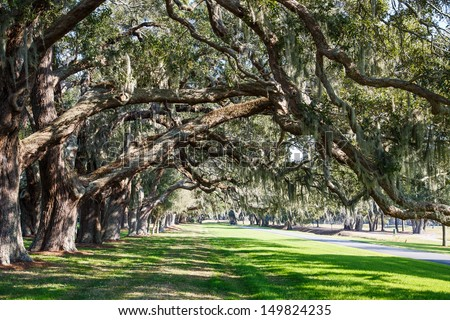 LInes of old oak trees around a lane of green grass - stock photo