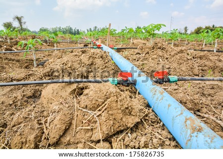 Lines of plastic tubing to deliver water in cassava plantations is growing - stock photo