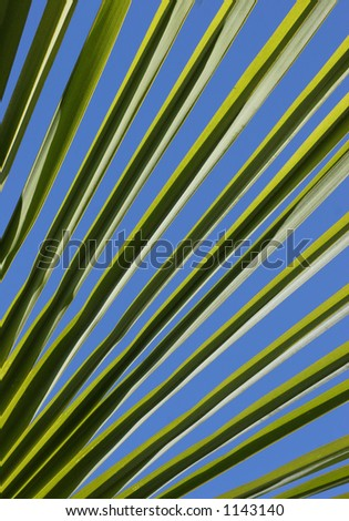 lines of the palm leaf