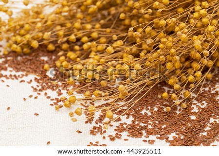 Linseed and dry flax plant twigs  on the natural linen fabric  background  - stock photo