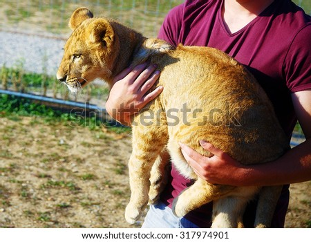 lion cub in man hands - stock photo