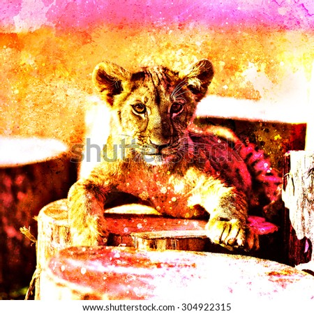 Lion cub in nature with blue sky and wooden log. eye contact. Abstract Collage - stock photo