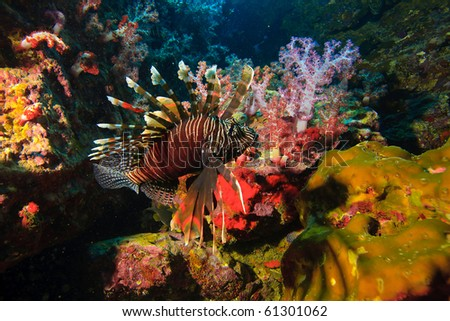 Lion fish soft coral and rocks - stock photo