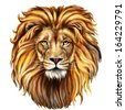 lion head digital painting/ lion head in front - stock vector